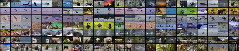 Kanada Tier Collage