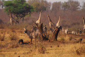 Namibia Tiere Wasserloch