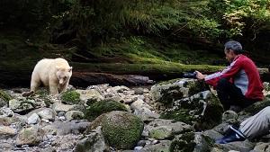 Weisser Kermode Bär Kanada